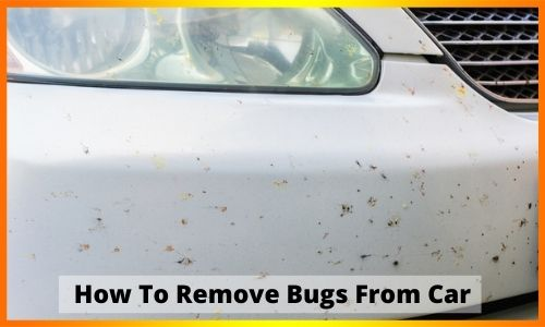 How to Remove Bugs from Car